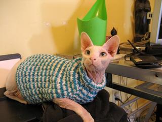 Cats love sweaters pattern by Christine Landry , Ravelry