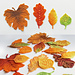 Autumn colors leaves pattern