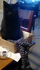 My knitting supervisor