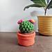 Cactus Trinket Box pattern