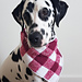 Summer Picnic Dog Neckerchief pattern