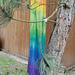 Regenbogen - Rainbow Stole pattern
