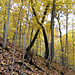 Quercus Prinus pattern