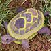 Tenacious Turtle pattern