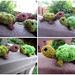 Amigurumi Bobble Stitch Turtles pattern