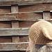 Tilda Hat pattern