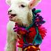 Olympia's Knit + Crochet Felted Flowers pattern