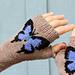 Butterfly Fingerless Gloves/Arm Warmers pattern