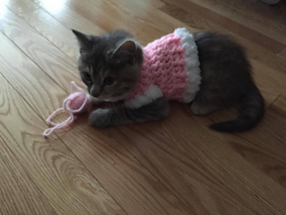 Crochet Kitten Sweater pattern by Lauralee Wellman , Ravelry