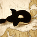 Oedipus the Orca pattern