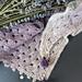 Il Glicine / Wisteria Flower pattern