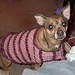 Dashing Dog Sweater pattern