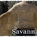 Secret of the Stole II - Savannah pattern