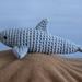 AquaAmi Dolphin pattern