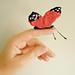 Lee Lee's Butterflies pattern