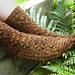 Willowbrook pattern