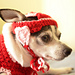 Valentine's Day Small Dog Hat pattern