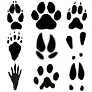 Image result for animal tracks