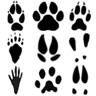 Image result for animal tracks