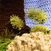 Fuzzy Wuzzy Caterpillar pattern