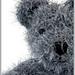 hairy bear pattern