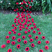 Poppies For ANZAC pattern